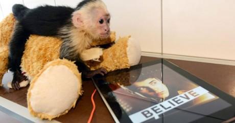 bieber-monkey1